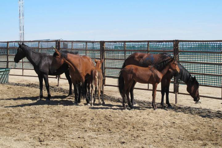 Special to Pahrump Valley Times Officials from the Nevada Department of Agriculture are urging ...