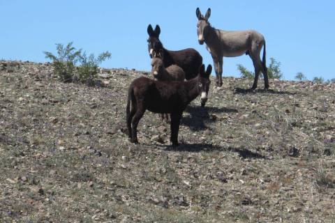 U.S. Bureau of Land Management Since May, a total of 42 wild burro carcasses with gunshot wound ...