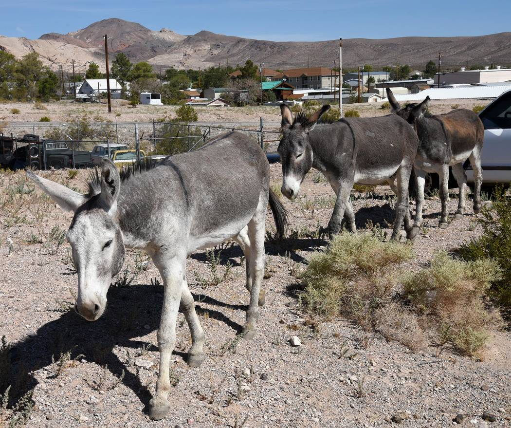 Richard Stephens/Special to the Pahrump Valley Times Some Beatty residents have been putting ou ...