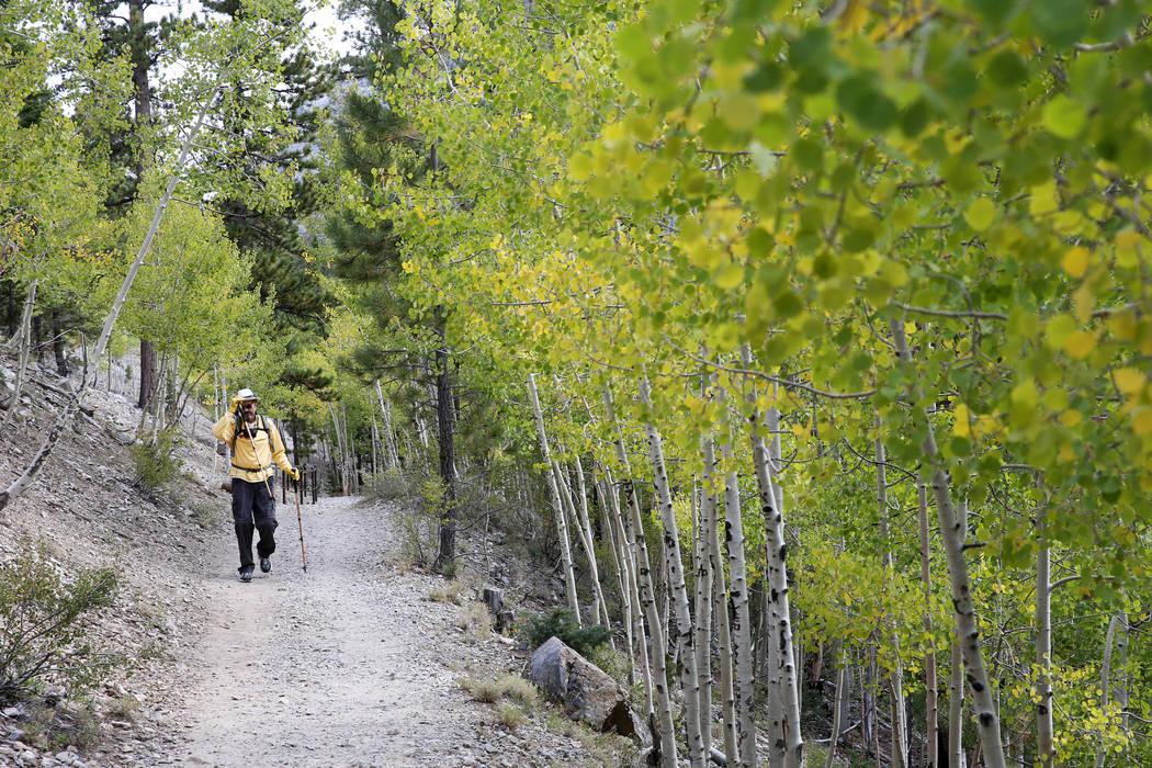 K.M. Cannon/Las Vegas Review-Journal David Wignall, 72, of Las Vegas hikes on the Bristlecone T ...