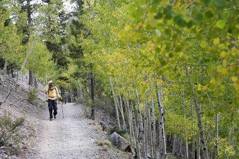 K.M. Cannon/Las Vegas Review-Journal David Wignall, 72, of Las Vegas hikes on the Bristlecone T ...