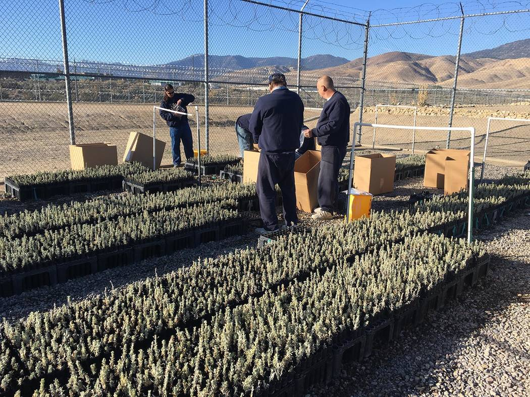 """Nevada Department of Corrections The """"Sagebrush in Prisons Project"""" is a nationally recognized ..."""