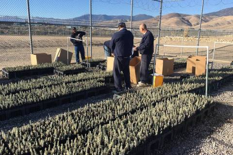 "Nevada Department of Corrections The ""Sagebrush in Prisons Project"" is a nationally recognized ..."