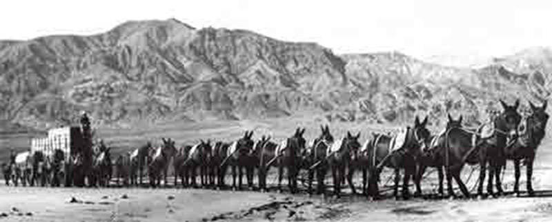 Courtesy of Death Valley National Park - A historical photo of the 20-mule team, the famous tea ...