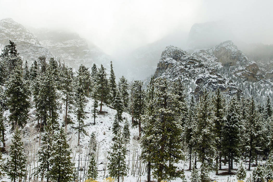 L.E. Baskow/Las Vegas Review-Journal Snow begins to dust the trees in Lee Canyon at Mt. Charles ...