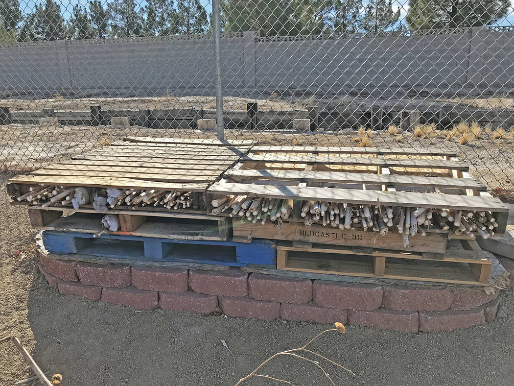 """Robin Hebrock/Pahrump Valley Times A """"bug hotel"""" constructed of old sunflower stalks is the new ..."""