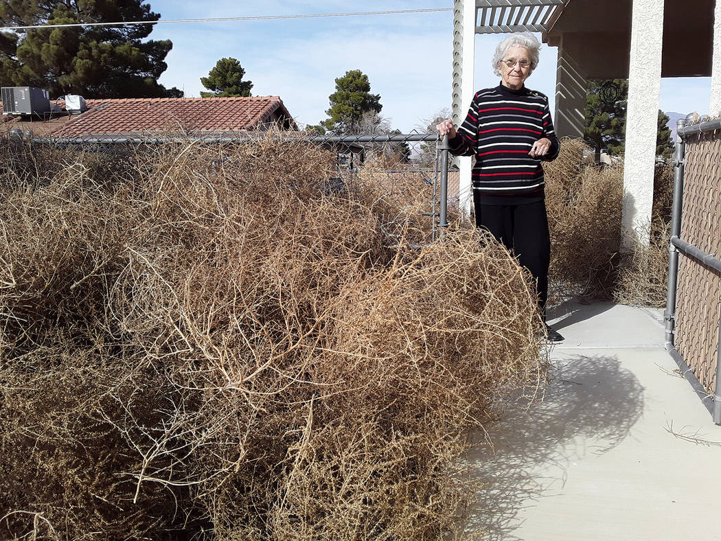 Selwyn Harris/Pahrump Valley Times Robison said burning the tumbleweeds was not an option due t ...