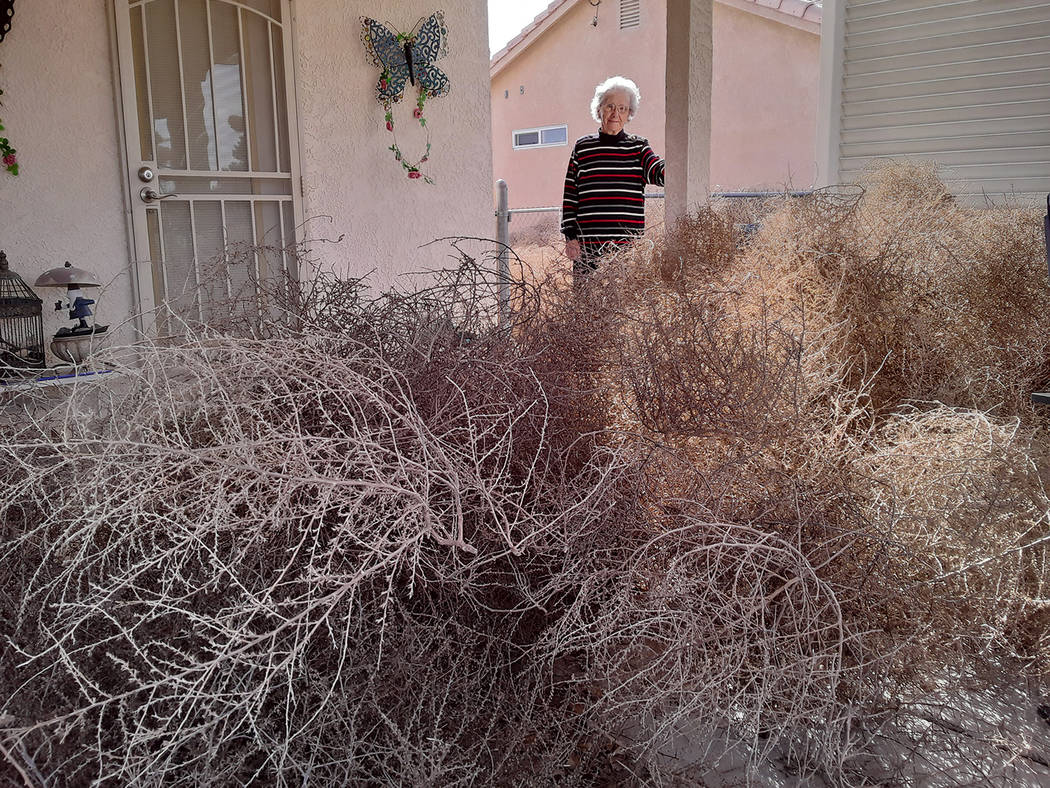 Selwyn Harris/Pahrump Valley Times Tumbleweeds were stacked as high as four feet at Betty Robis ...