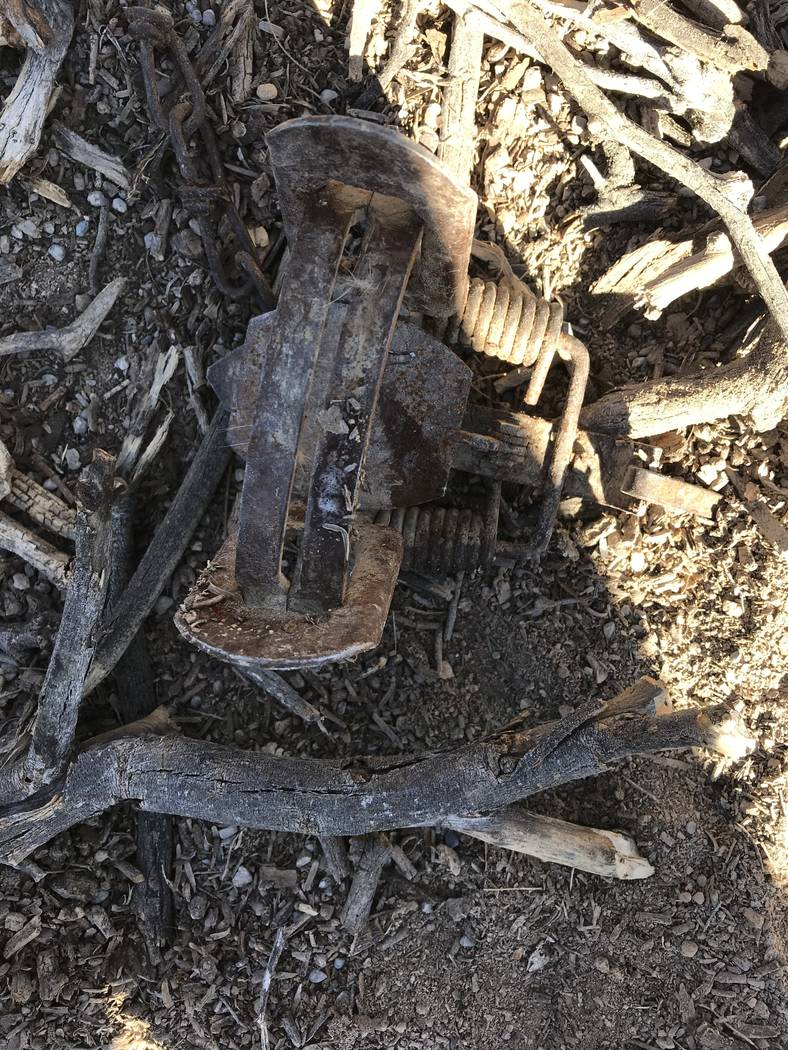 Vern Hee/Special to the Pahrump Valley Times This trap was set, intended for coyotes but inste ...