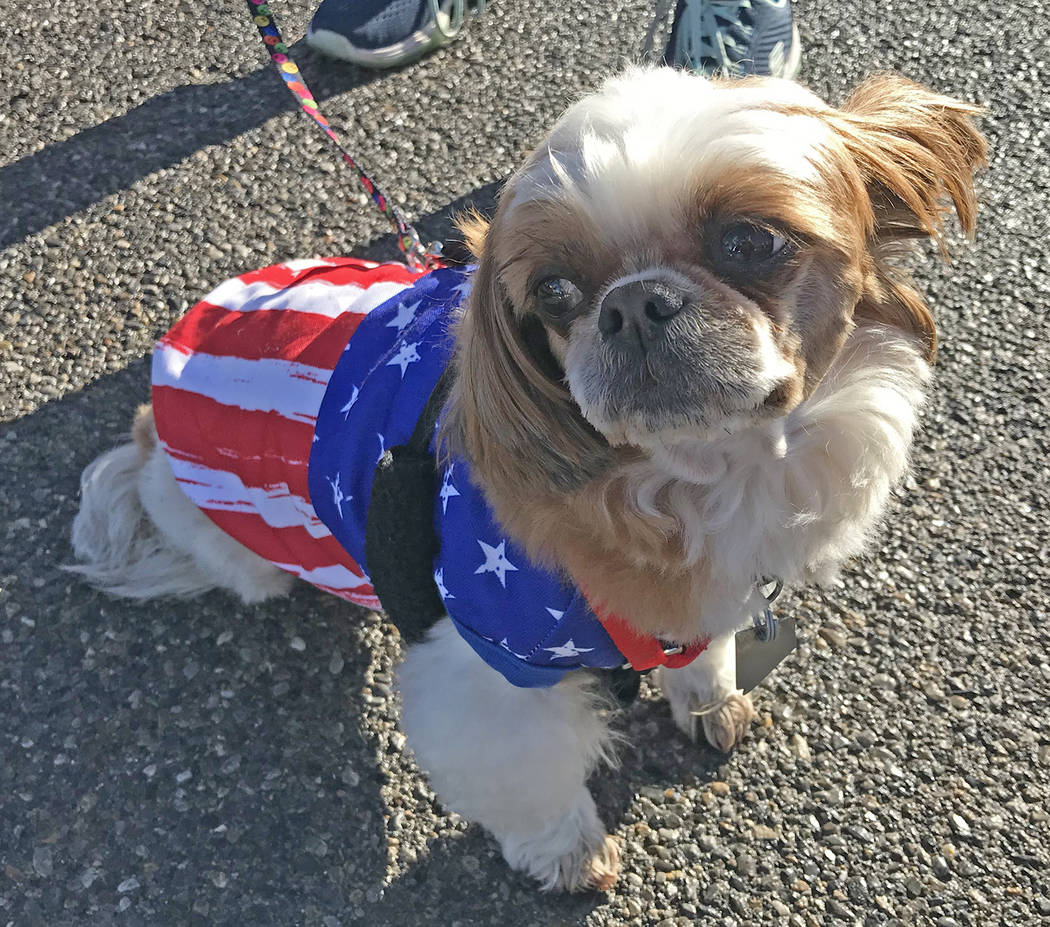 Robin Hebrock/Pahrump Valley Times This photo shows a local pooch all dressed up for the Keep A ...