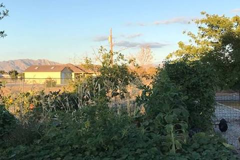 Terri Meehan/Special to the Pahrump Valley Times Three Sisters gardening is an ancient form of ...