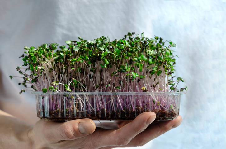 Getty Images Microgreens are trendy right now in the world of market farming. One of the reaso ...