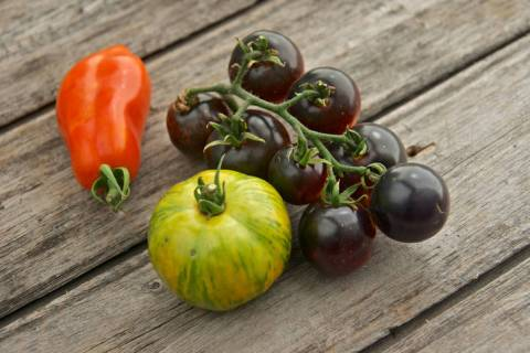 Getty Images Picking the right variety is the key to success. San Marzano, Green Zebra, and Bla ...