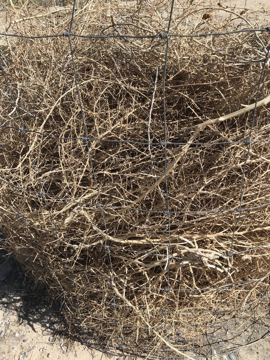 Robin Hebrock/Pahrump Valley Times Ever-growing piles of weeds and yard debris must wait for di ...
