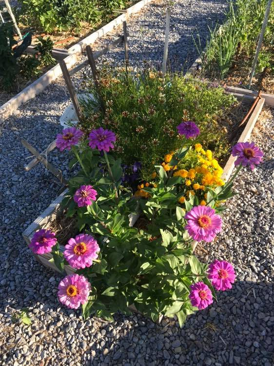 Terri Meehan/Special to the Pahrump Valley Times Zinnias may just be the easiest flower to grow ...