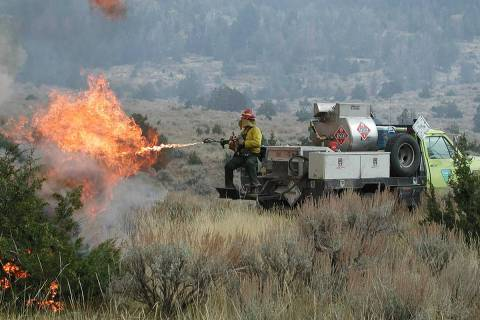 Special to the Pahrump Valley Times A Bureau of Land Management firefighter ignites juniper and ...