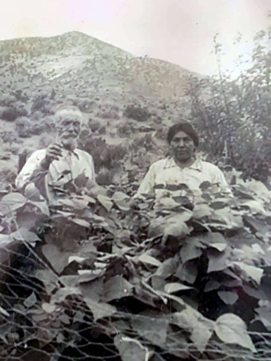 Special to the Pahrump Valley Times Cesar and Mary Rose Strozzi in the pea patch at Strozzi Ranch.