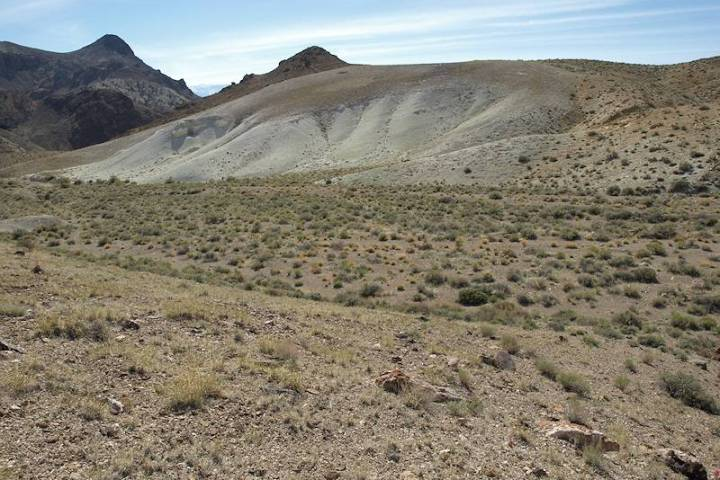 Nevada Department of Conservation and Natural Resources Nevada is home to more than 150 plant s ...