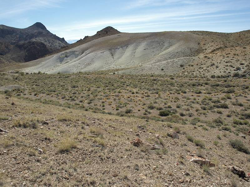 Nevada Department of Conservation and Natural Resources The Nevada Division of Forestry will be ...