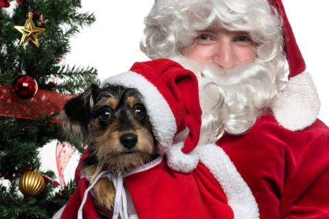 "Getty Images ""Pet Day"" photos with Santa event is set for Wednesday at Pahrump's Salvati ..."