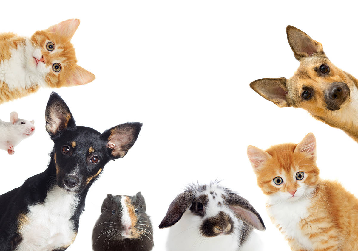 Special to the Pahrump Valley Times The Never Forgotten Animal Society is hosting a pets with S ...