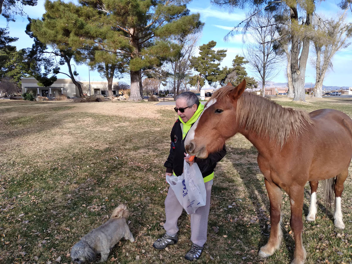 Selwyn Harris/Pahrump Valley Times Proenza said he befriended the wild mustang while out walkin ...