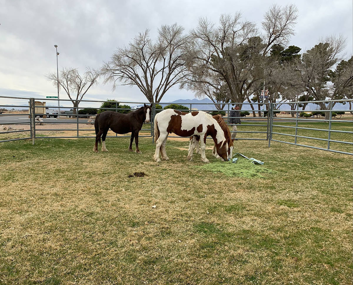 Bureau of Land Management Three wild horses were removed recently from the Calvada Eye and will ...