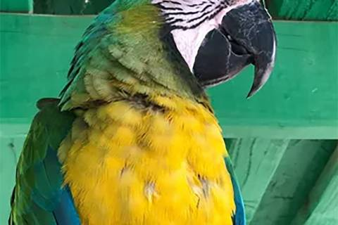 Heidi Fleiss.com Pahrump resident and bird sanctuary owner Heidi Fleiss believes her longtime c ...