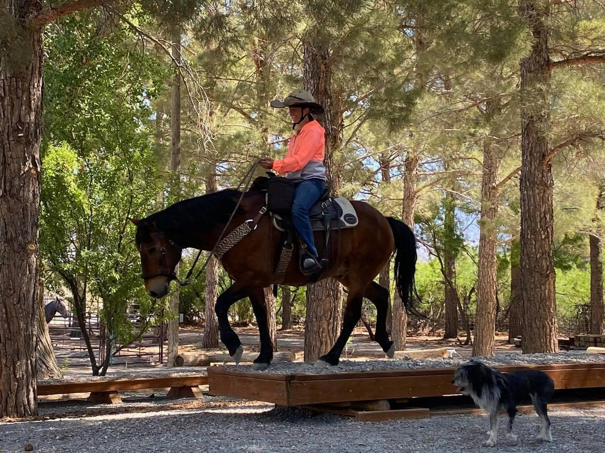 Nevada Discovery Ride This year marks Szesciorka's third long-distance ride across the state. ...