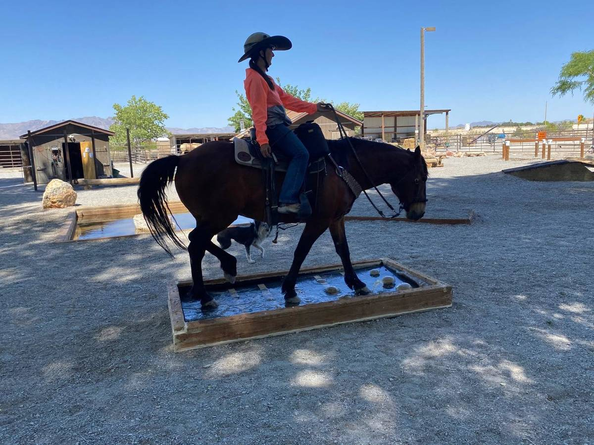 """Nevada Discovery Ride Sage has been """"an exemplary mustang and ambassador for wild horses' ado ..."""