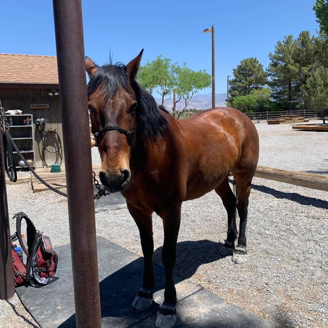 Nevada Discovery Ride Szesciorka's ride promotes wild horse adoption, public land preservation, ...