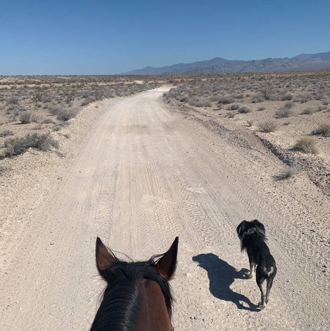 Nevada Discovery Ride In 2016, Szesciorka rode 1,122 miles across Northern Nevada for three mon ...