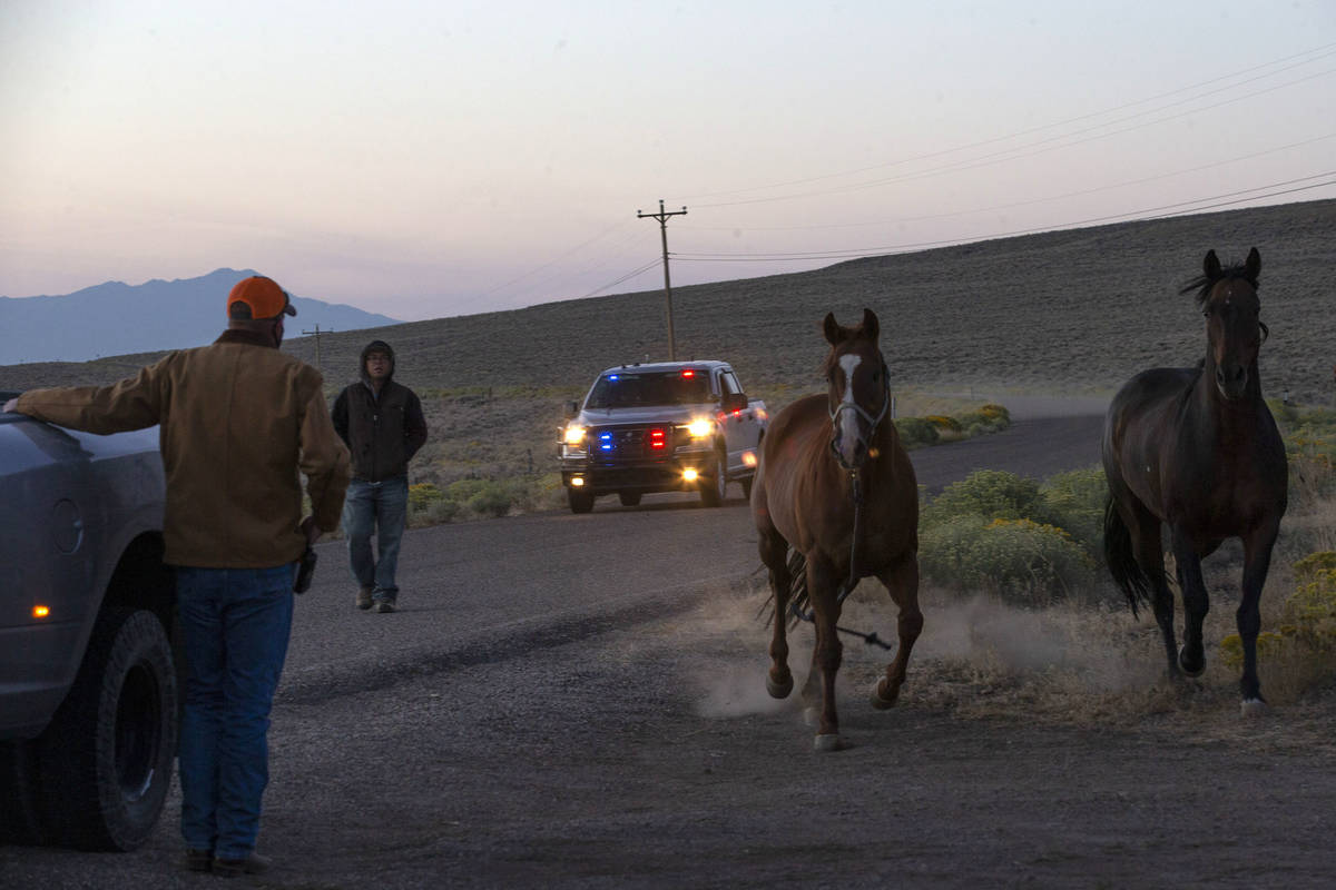 Two domesticated horses are rounded up by Eureka's sheriff as the crew heads out to the first d ...