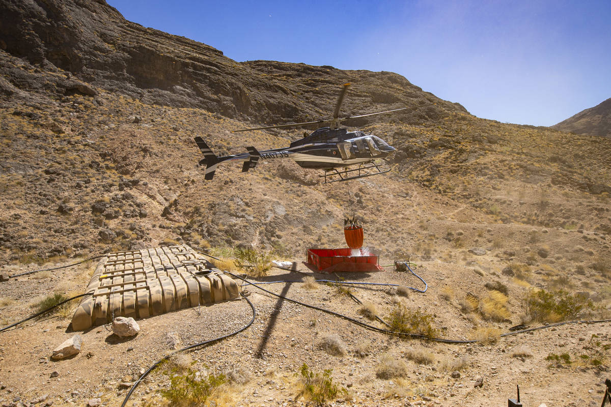 Rick Thielmann, chief pilot at the Nevada Department of Wildlife, releases water using a Bambi ...