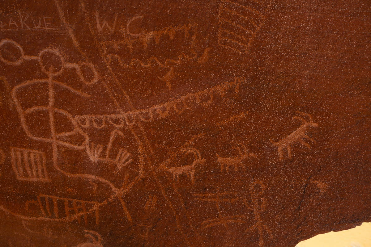 Petroglyphs depicting bighorn sheep are seen at Atlatl Rock in Valley of Fire State Park on Tue ...