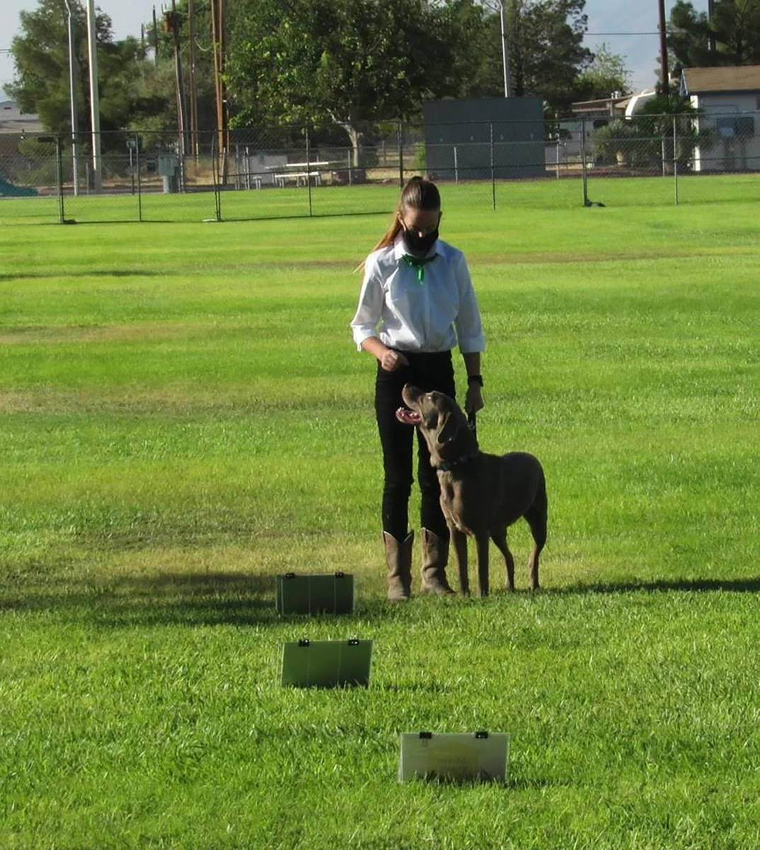Stormy Ingersoll/Special to the Pahrump Valley Times A member of the 4-H Dog Den club is shown ...