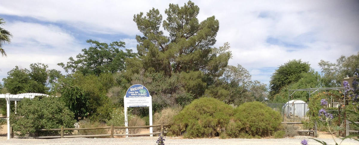 Heather Freeman/Special to the Pahrump Valley Times The Demonstration Garden at the University ...