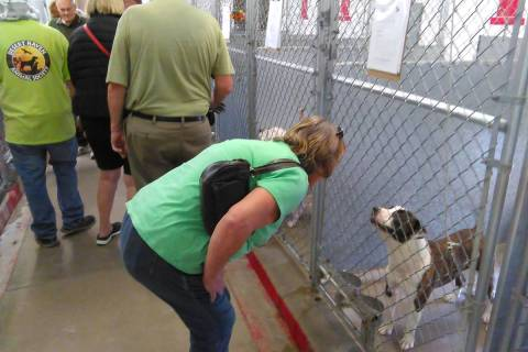 Selwyn Harris/Pahrump Valley Times Each year during the July Fourth holiday, dogs who escape th ...