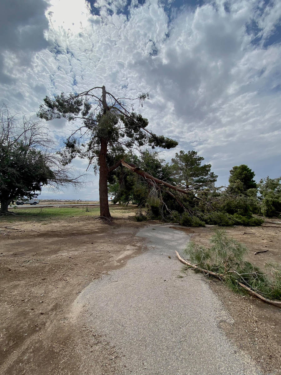 Special to the Pahrump Valley Times Annette Blodgett also took this picture of a damaged tree a ...