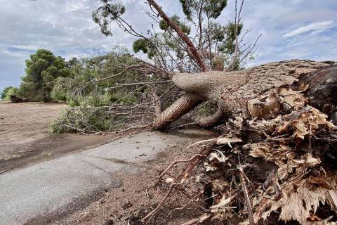 Special to the Pahrump Valley Times Taken by Annette Blodgett, this photo shows a downed tree a ...
