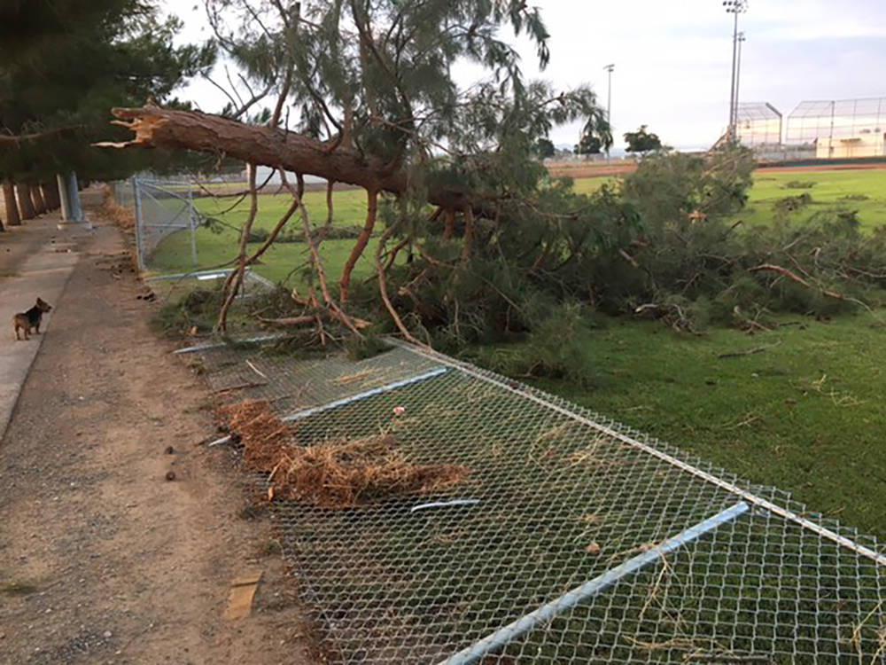 Special to the Pahrump Valley Times Resident Richard Bushart shot this photo of a downed tree l ...