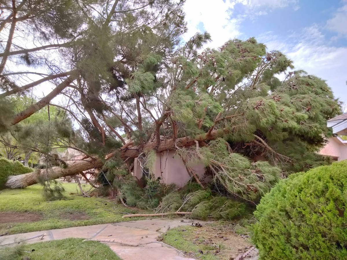 Special to the Pahrump Valley Times Provided by Trudy Mazac Hampton, this photo shows a tree th ...