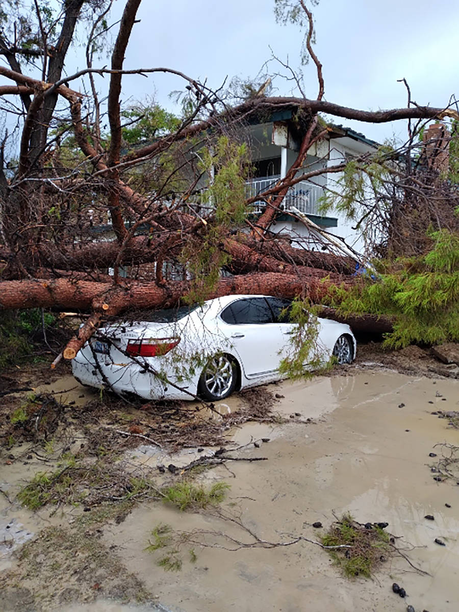 Selwyn Harris/Pahrump Valley Times On Sunday evening July 25, wind gusts caused a mature pine t ...